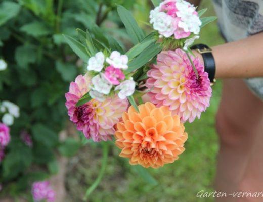 Gartenblumen für die Vase bei garten-vernarrt.de