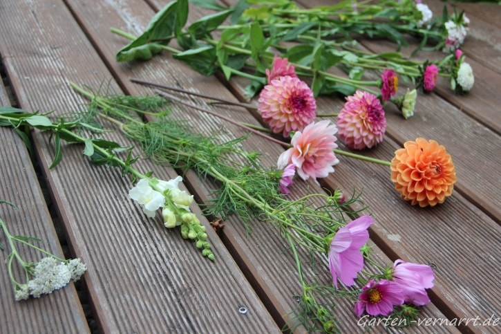 Dahlien, Zinnien und Cosmeen schöne Schnittblumen