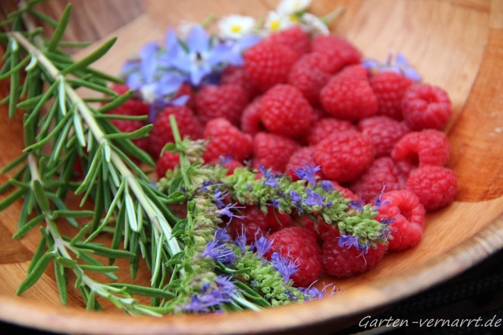 Himbeeren, essbare Blüten und Kräuter für die Eiswürfelherstellung