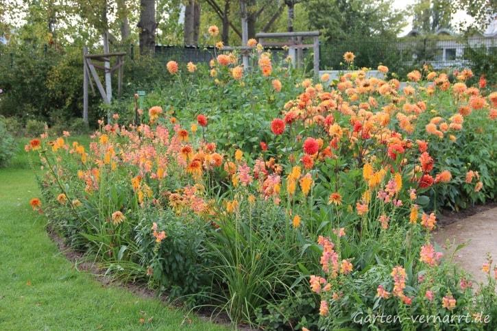 Dahliengarten auf der IGA: Dahlien in warmen Orange- und Rottönen