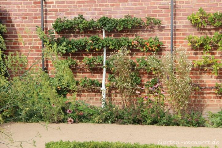 Obstspalier: Apfelbaum auf der IGA vor Backsteinwand