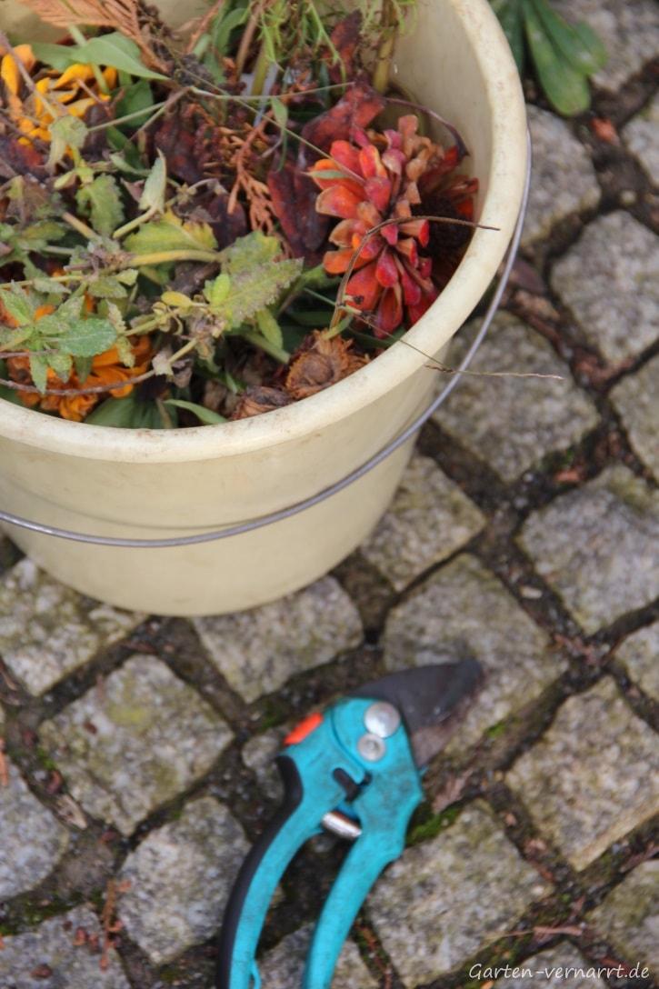 Verblühte Gartenblumen schneiden