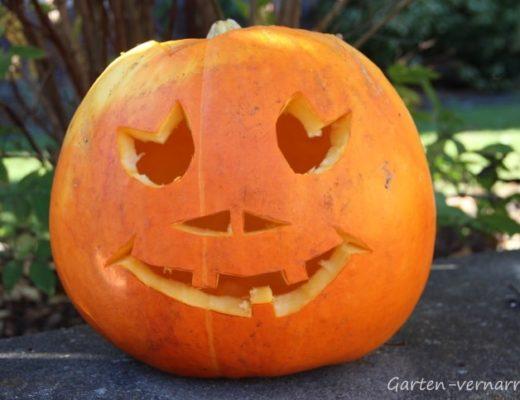 Kürbis schnitzen für Halloween