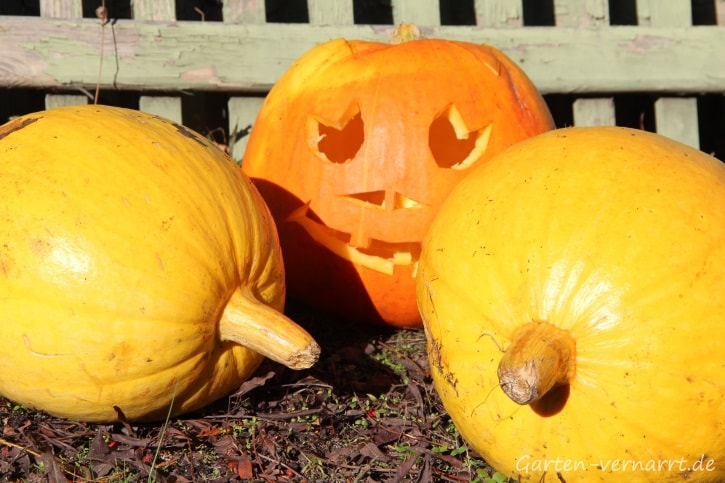 Geschnitzter Kürbis für die Halloween-Deko
