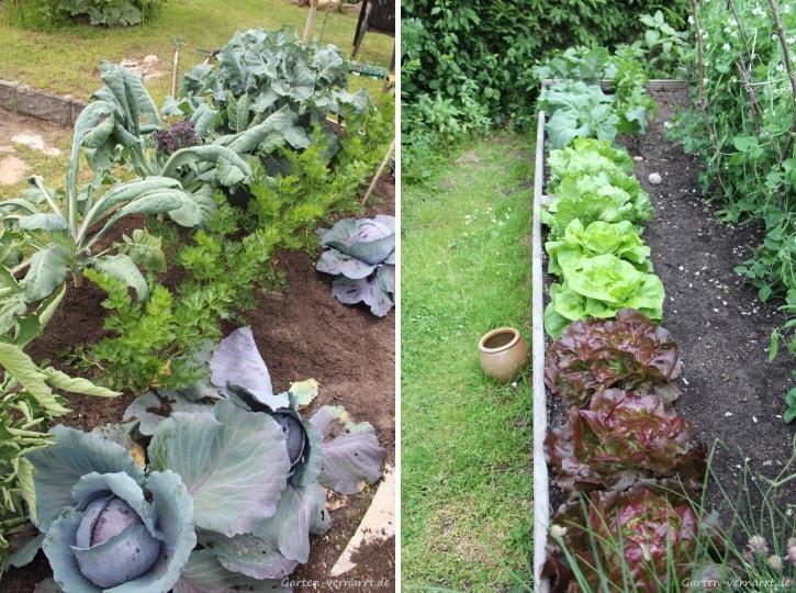 Gartenjahr 2017 - dieses Gemüse gedieh gut