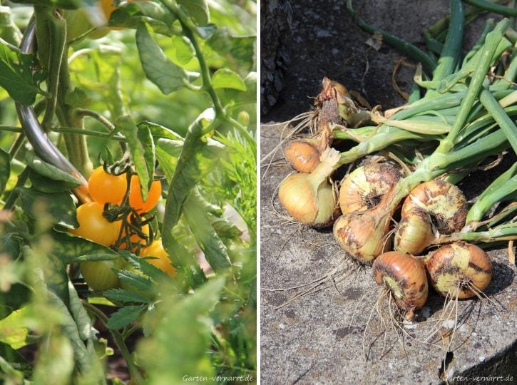 Tomaten und Zwiebeln aus dem eigenen Garten