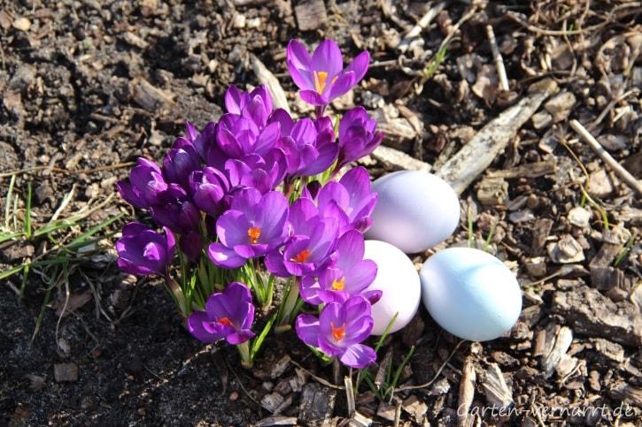Krokusse und Osterdeko im Frühling