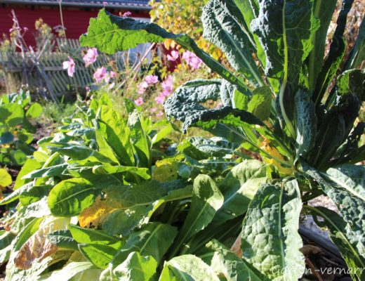 Gartengemüse im Herbst